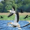 Calendarul evenimentelor ecologice marcheazã data de 2 februarie drept Ziua Zonelor Umede. Aceasta a fost stabilitã prin Convenţia asupra Zonelor Umede, semnatã la Ramsar, în Iran, în 1971 şi ratificatã...