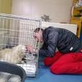 Situaţie de neimaginat pentru un medic veterinar din Târgu Jiu care a mers la padocul de la Târgu Cărbuneşti pentru a adopta o căţea care tocmai fătase trei pui, pe...