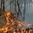 Statisticile începutului de an de la Regia Naţională a Pădurilor situează judeţul Gorj pe primul loc la incendiile de pădure produse în primele trei luni ale lui 2017. Culmea...