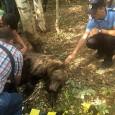 Astăzi, 30 august a.c., paznicii de vânătoare din cadrul Asociaţiei de Vânătoare Gorunu, au informat că au găsit în zona împădurită din apropierea localităţii Crasna, pe fondul cinegetic Cărpiniş,...
